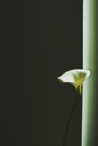 The image features a single white flower standing tall beside a window.