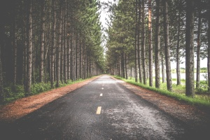 The image features a road cutting through a forest of tall trees.