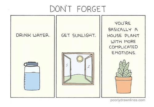 dont-forget-youre-basically-a-drink-water-get-sunlight-house-28888019.png